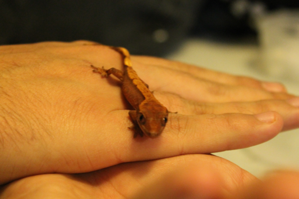gecko9175