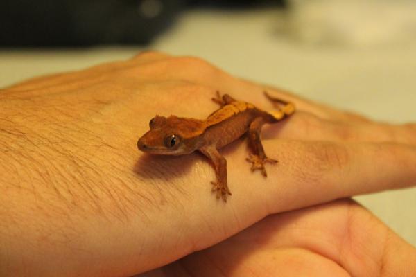 gecko9176