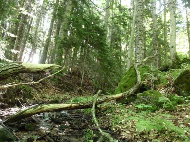 Лесной ручей рядом с заброшенной дорогой