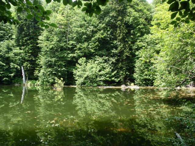 Лесное озеро среди окружающей зелени не сразу приметишь