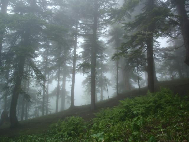 Начало пути по тропе. Лесовозка осталась внизу.