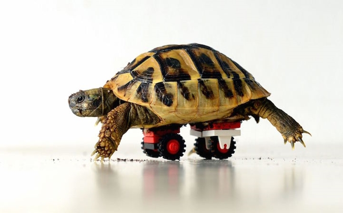 tortoise-lego-wheelchair