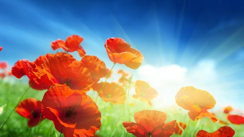 flowers_1920x1080_27250