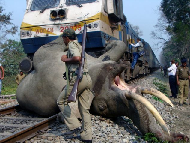 elephant_train_01