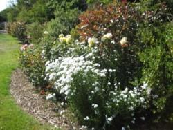 Peter's Garden 6