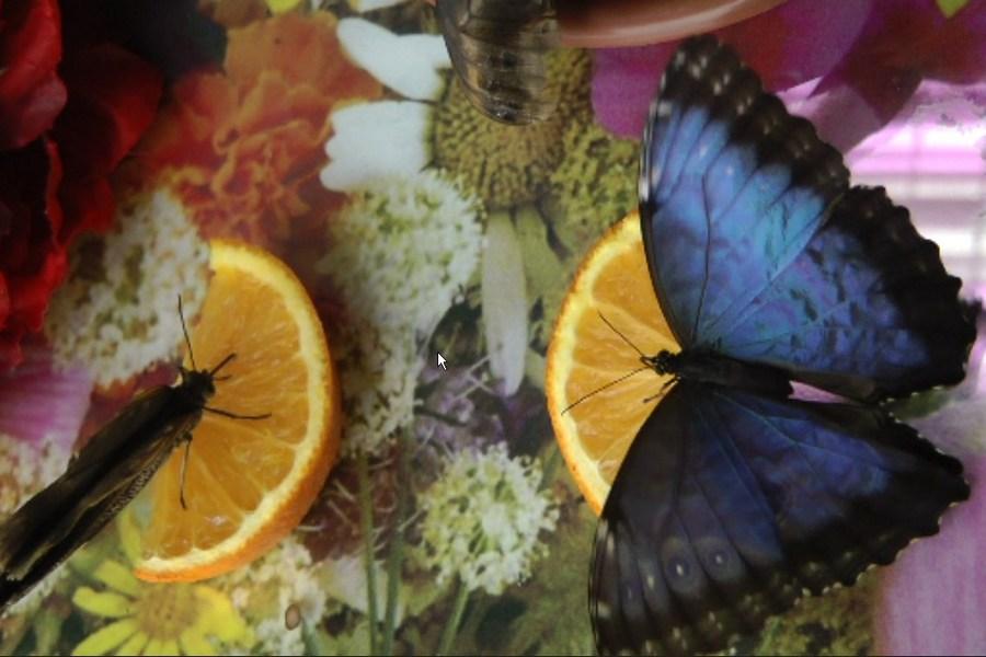 Парк бабочек в Ростове-на-Дону