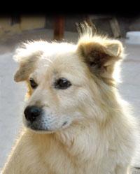 perro chiribaya