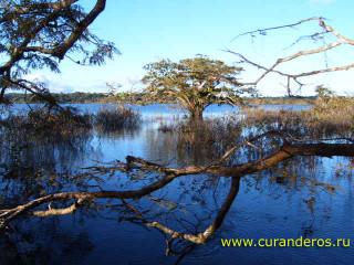 сельва, Амазонка, природа, экотуризм