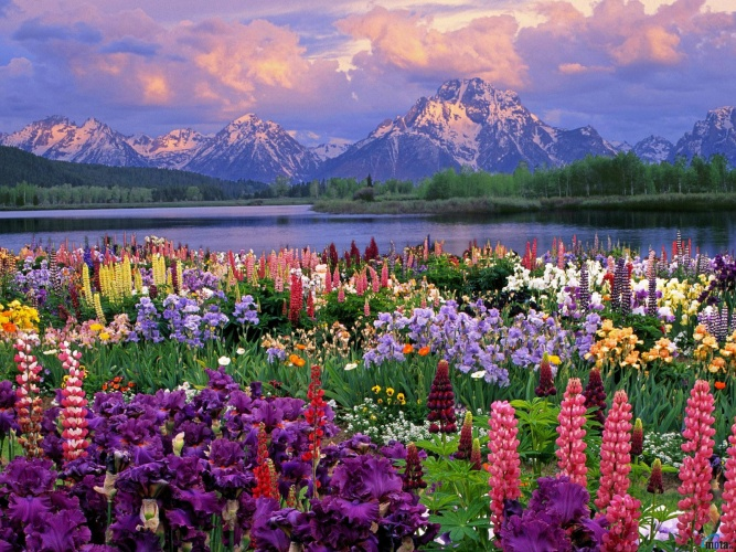 flowers_577-crop