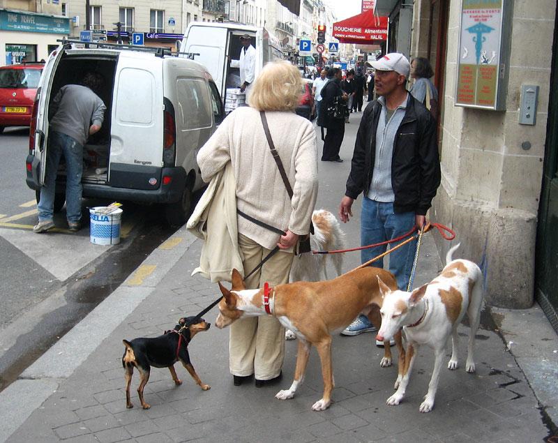 Dogs_paris