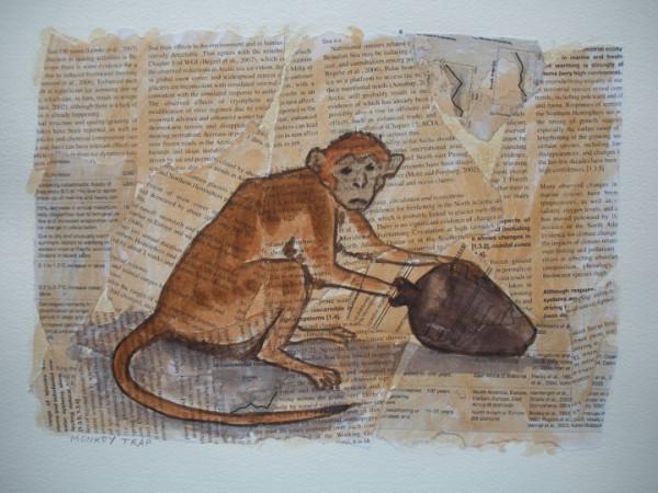 ловят обезьяну