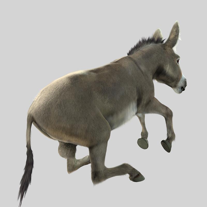 Donkey_04_LR