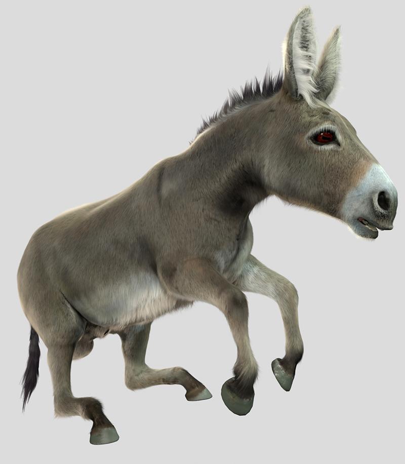 Donkey_05_LR