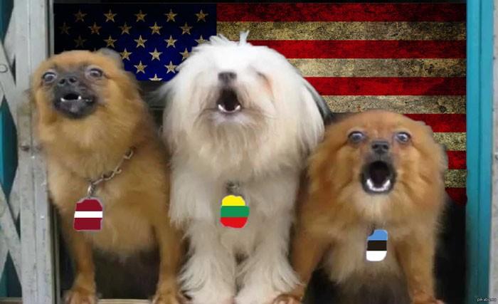 1484644080_doggy