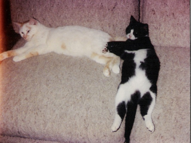 Tex and Felix