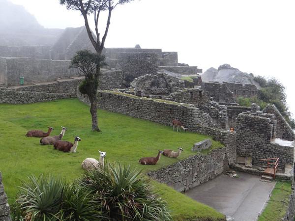 Machu Picchu tour full day