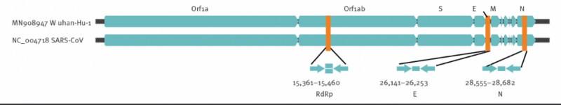 Diagram of the locations of the Ee gene and the RdRp gene