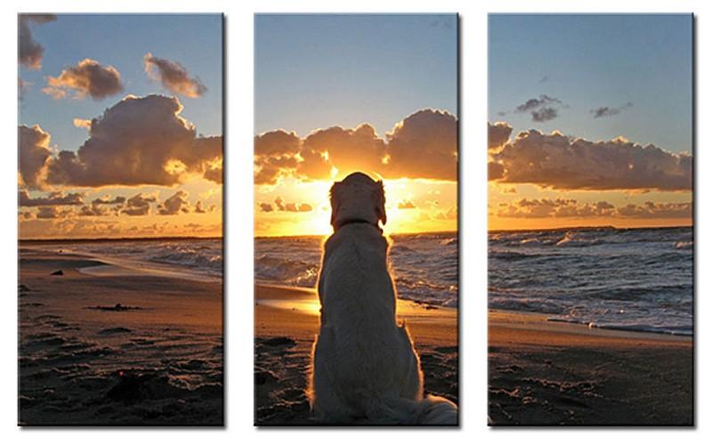 sunrisedog