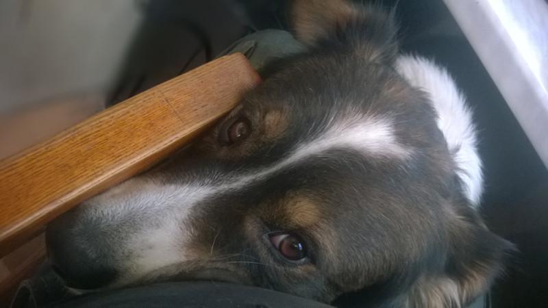 poordog