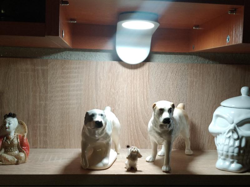 dogfigs