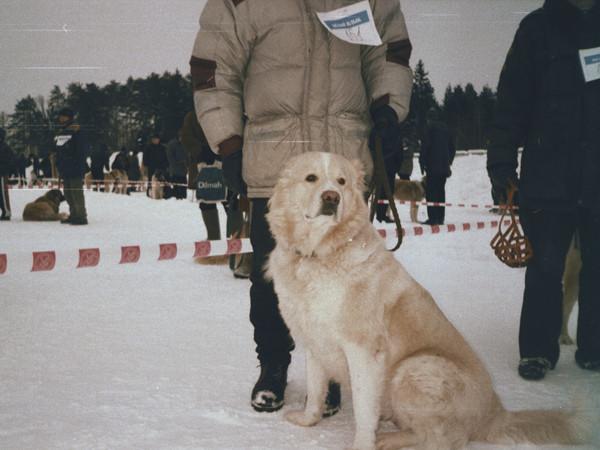 Toma 1998-99