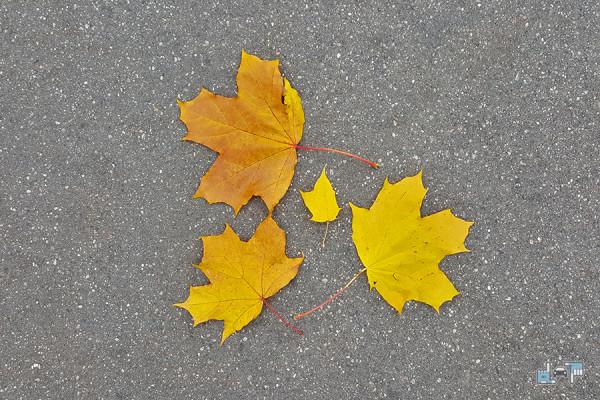 1-leaves.jpg