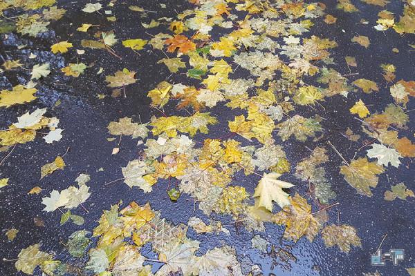 2-leaves.jpg