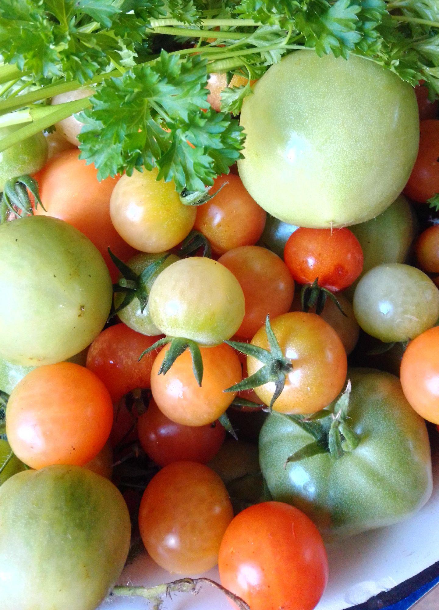 Октябрьские помидоры