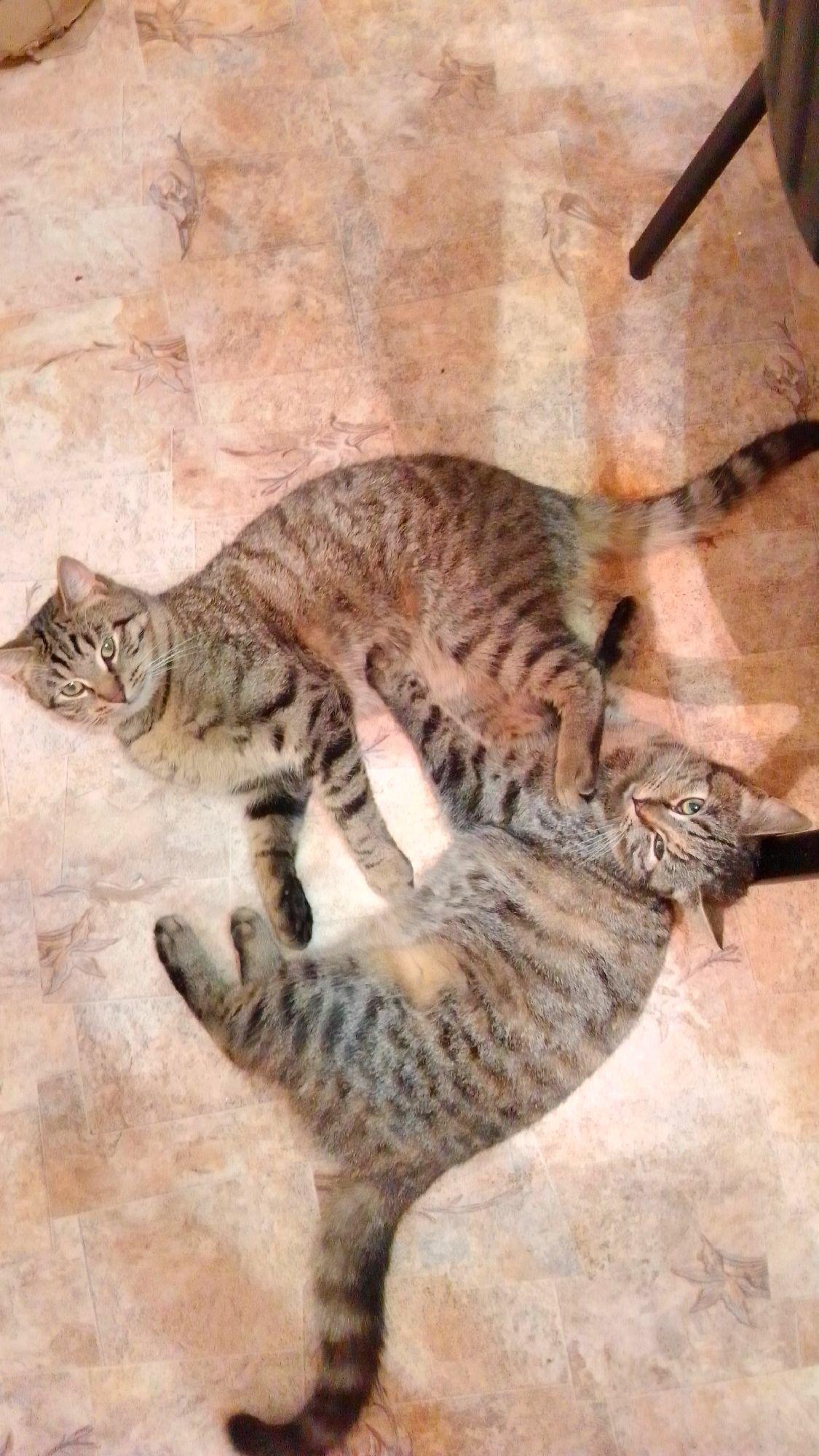 Тигра и Плюша