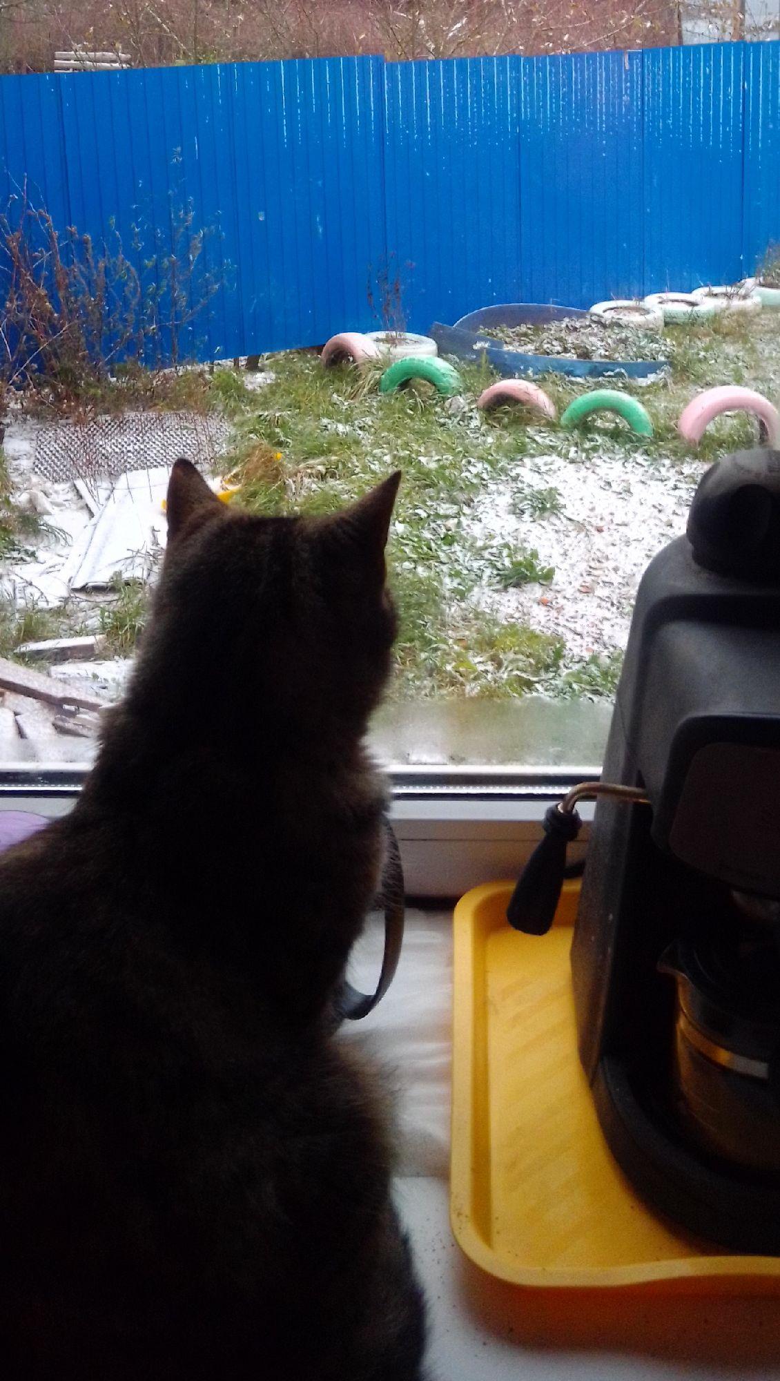 Плюша ловит взглядом снежинки