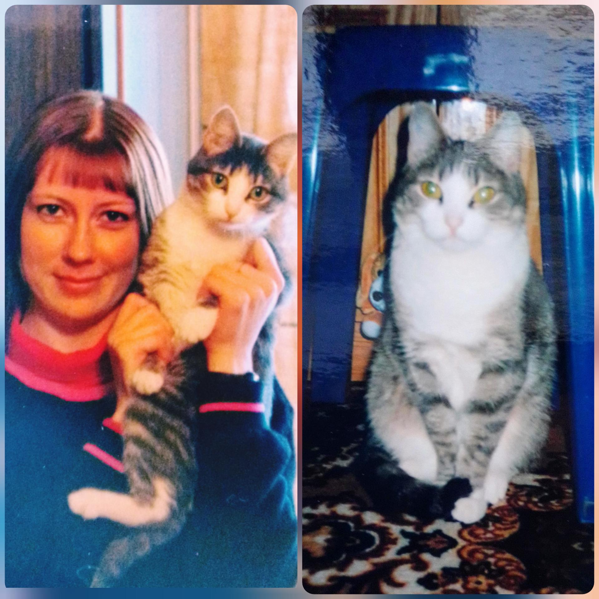 2002 год. Муська. Крепко держу, чтобы сделать фото, пока не вырвалась