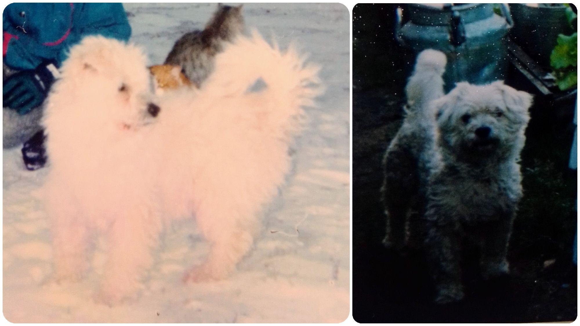Кешка зимой (слева) и летом (справа)