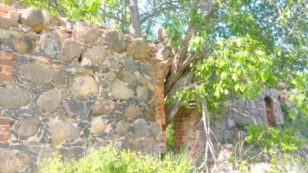 Дерево, проросшее сквозь стену.
