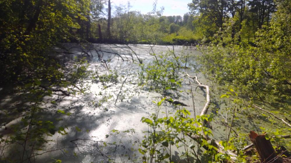 Заброшенный пруд