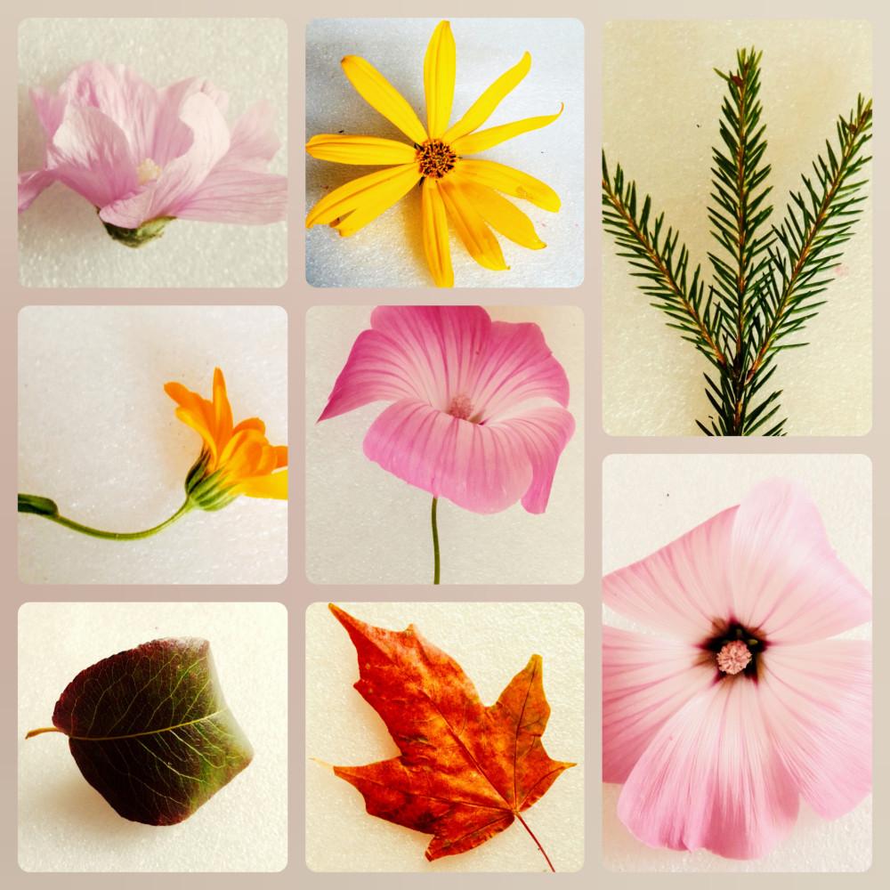 Собранные детьми листья и цветы