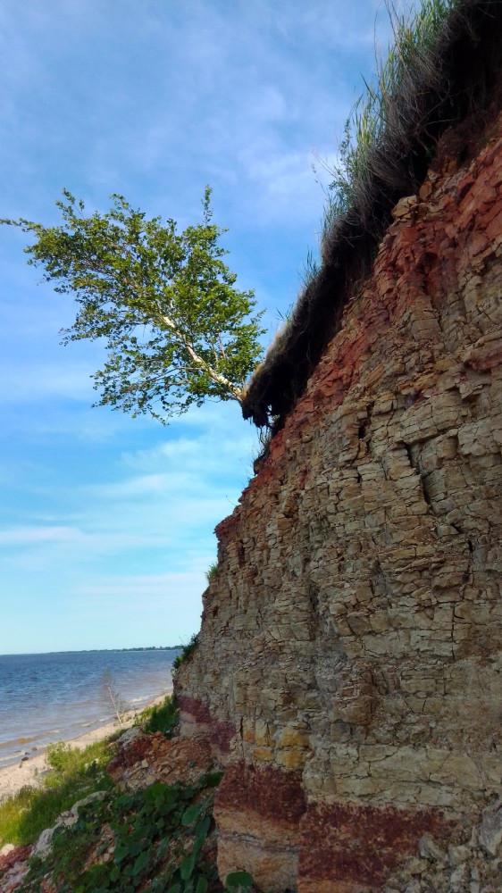 Берёзка из последних сил цепляется корнями за землю