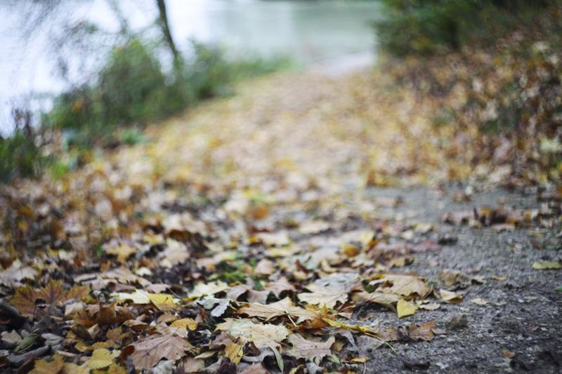 automne à noisiel2