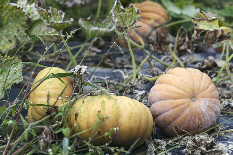 automne en seine-et-marne1