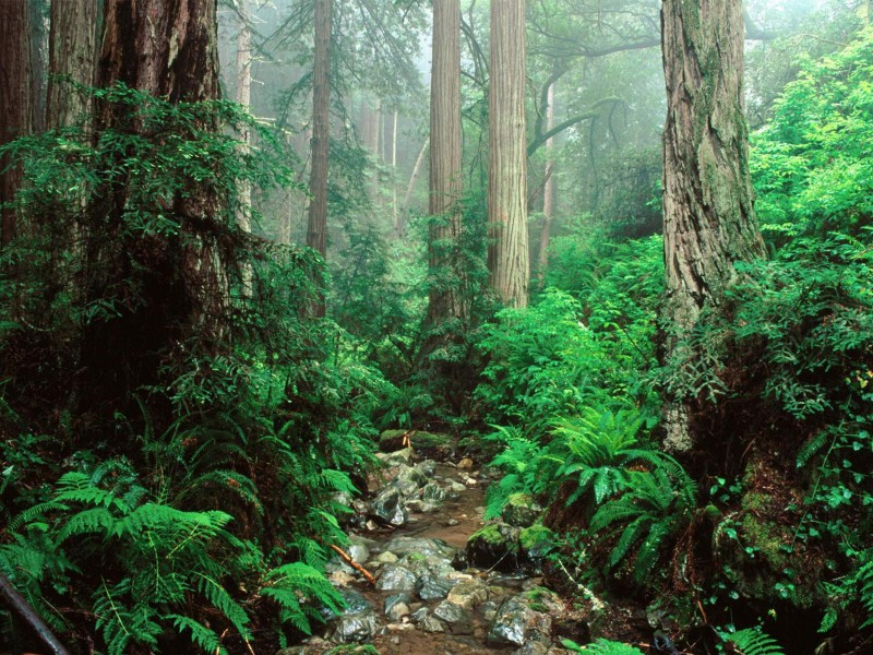 kartinki24_forest_0023.jpg