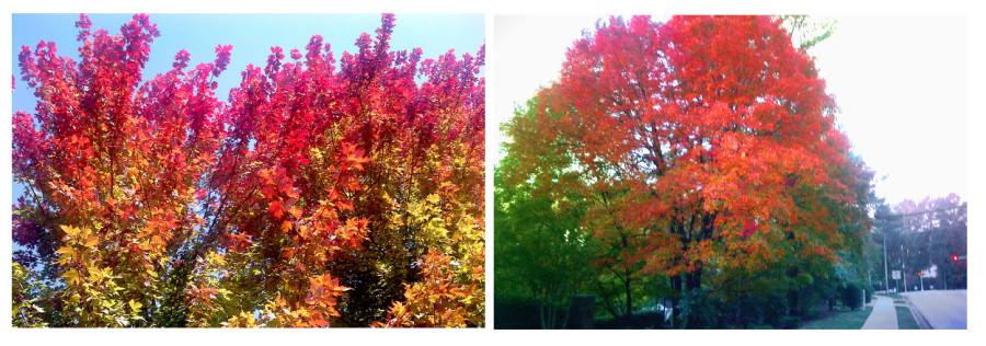 03_tree