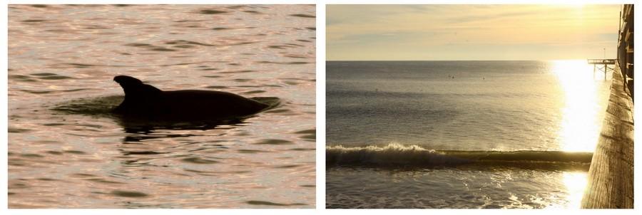 07_dolphin2