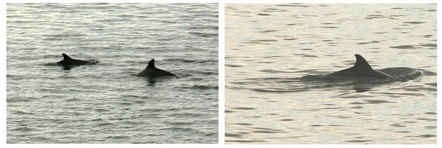 08_dolphin3