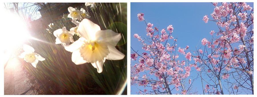 01_spring