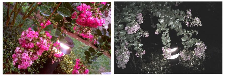 01_flowers