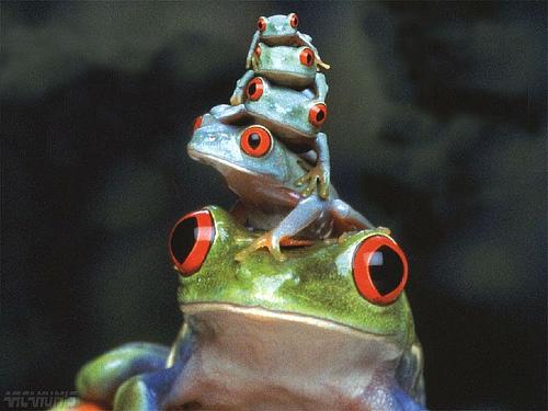 frog pyramid