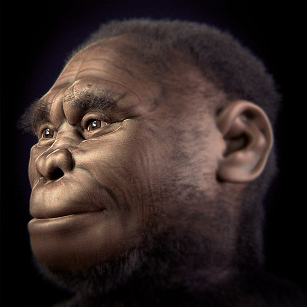 Реконструкция облика Homo floresiensis