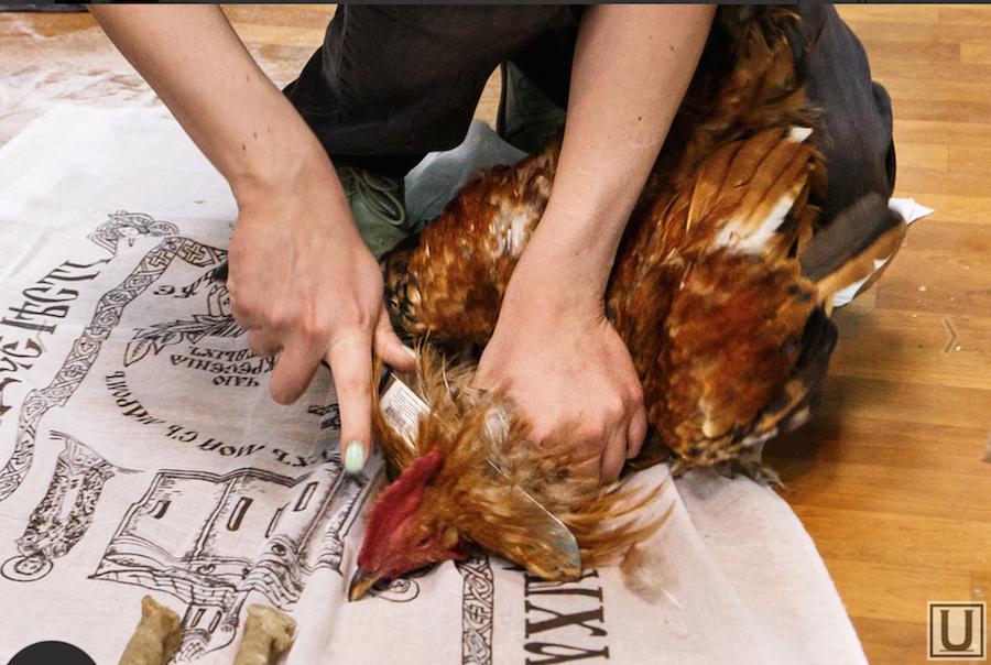 купле-продаже земельных ритуал с черной курицей нашем