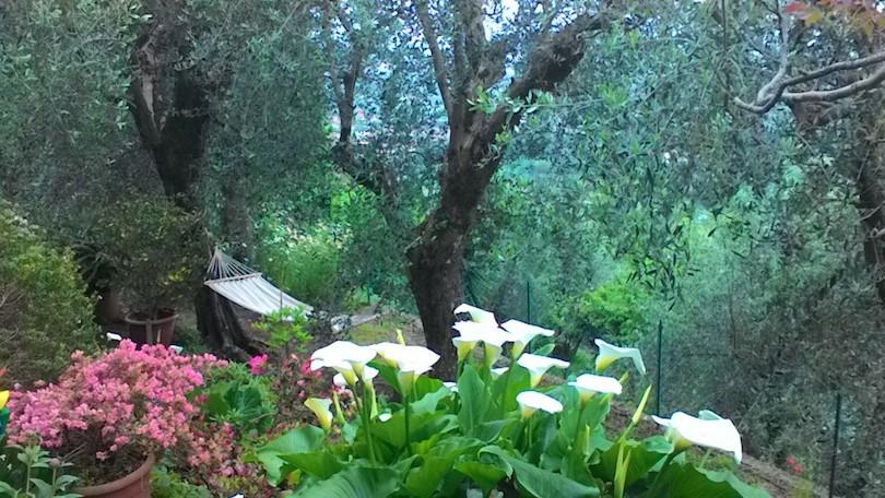сады1