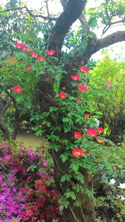 сады3