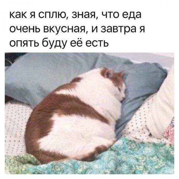 11266156